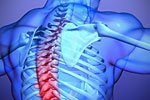 digital reproduction of injured thoracic spine