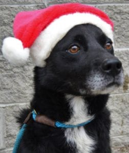 Gordon the Christmas Dog Sponsored by West Law Firm