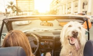 girl and dog in convertible driving too closely to vehicle ahead